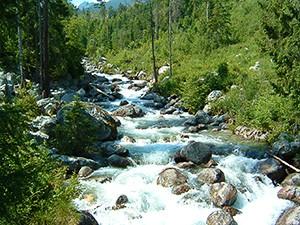 Studený potok pri Tatranskej Lesnej