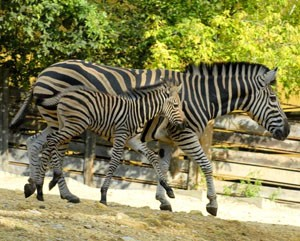Bajmóci állatkert